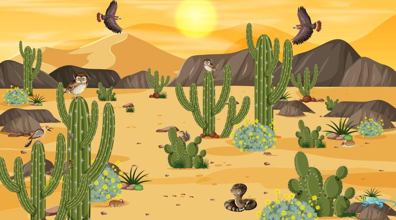 沙漠森林景观 日落景象 沙漠动植物